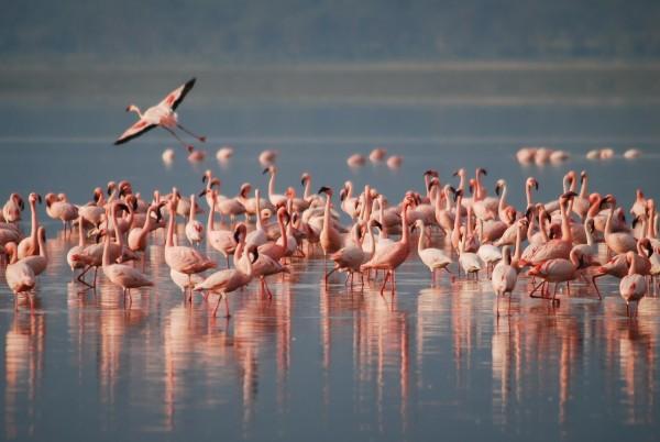 flamingos-1099071_1280